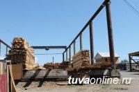 Активисты Народного фронта выявили нелегальных поставщиков древесины в Туве