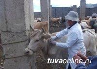 В Туве проходит реорганизация ветеринарной службы