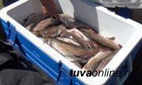 В Туве житель Красноярска был задержан с уловом краснокнижных видов рыб