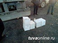 Народные дружинники Ак-Довурака вместе с полицейскими пресекли провоз контрафактного алкоголя