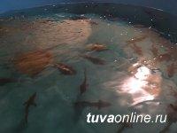В Туве начала работать акваферма
