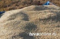 В Туве сформирован запас семян зерновых культур в 5 тысяч тонн