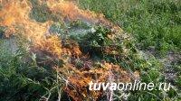 План по уничтожению дикорастущей конопли на территории Тувы выполнен на 95 %
