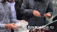 В Красноярск под видом шоколадных конфет из Тувы привезли крупную партию гашиша