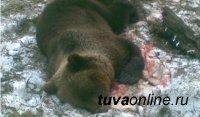 В Туве охотник попал в больницу после встречи с бурым медведем