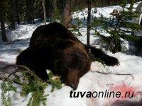 В Кызыле выявлено зараженное мясо медвежатины
