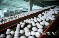 В Туве на птицефабрике «Енисейская» в сутки получают 28 000 шт. яиц