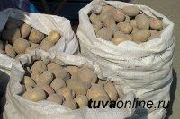 В Туву пытались ввезти картофель из карантинной зоны