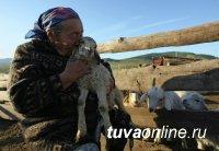 Пенсии селянам, проработавшим более 30 лет в сельском хозяйстве, вырастут в 2019 году