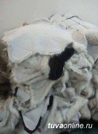 В Туве проведут мастер-класс по обработке овечьих шкур