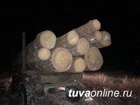 В Чаа-Хольском районе Тувы сотрудниками полиции пресечена незаконная рубка лиственницы