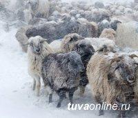 В Туве 9-летняя девочка, отправленная отцом пасти скот в 40-градусный мороз, получила тяжелое обморожение пальцев рук