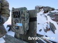 На плато Укок в Горном Алтае фотоловушки «поймали» трех снежных барсов