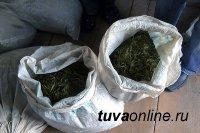 В лесу рядом с с. Усть-Элегест (Тува) полицейские обнаружили два мешка с наркотическим веществом