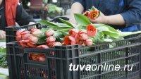 В Кызыле определены места для продажи цветочной продукции