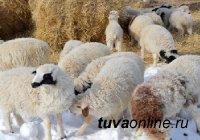 Глава Тувы поручил организовать водоснабжение животноводческих хозяйств