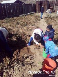 """Многодетным и малоимущим семьям Кызыла, имеющим огороды, помогут """"социальным картофелем"""""""