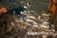 Лещ стал угрозой для пеляди и сига в реках и озерах Тувы