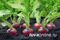 Лунный календарь Сибири для посадок семян, рассады и растений на апрель 2019 года