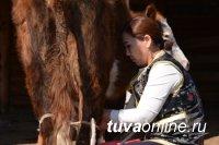 Кыштаг для молодой семьи: Полученные вместо 200 овец 20 коров помогли организовать молодой семье молочное производство