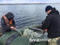 В Туве озеро Чагытай очистили от браконьерских сетей