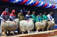Хозяйства Тувы участвуют в 16-й Сибирско-Дальневосточной выставке племенных животных в Улан-Удэ