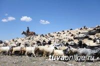 В Туве новичков в сельхозбизнесе поддержат субсидиями до 3 млн. рублей