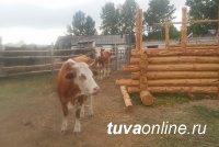 В селе Ийме десять семей объединились в кооперативное хозяйство, чтобы открыть молочную ферму