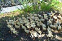 Тува: УФСИН прокормит не только себя