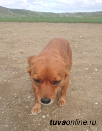 У горы Догээ бегает маленькая рыжая собачка. Хозяева, отзовитесь!