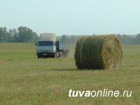 В Туве заготовили 3957 тонн сена