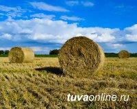В Туве заготовили 8567 тонн сена