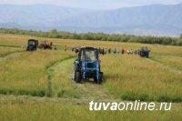 Лидер по кормозаготовкам в Туве - Тандинский кожуун