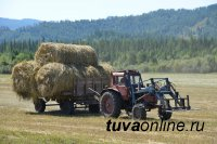 В Туве заготовили 49 тысяч тонн сена