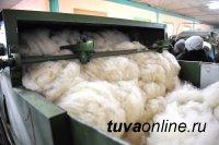 Скорняжный цех в Туране принимает овечьи шкуры на переработку