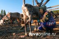 В Туве помогут становлению семейных оленеводческих ферм