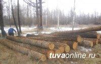 В Туве ущерб от незаконных рубок леса превысил четыре миллиона рублей