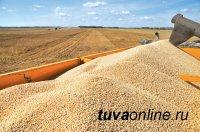 Аграрии Тувы в 2019 году в 2,3 раза увеличили производство зерна
