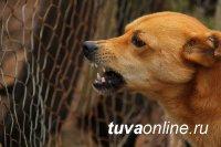 В МЧС рассказали, как одним словом отогнать злую собаку