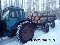 В Туве привлекут к ответственности нелегальных рубщиков леса