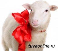 В Кызыле на праздники власти города подарили многодетным отцам-одиночкам баранов