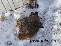 В Туве защитники животных ждут внесения поправок в Конституцию