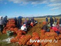 В Туве губернаторский проект «социальный картофель» в 2020 году охватит 3084 участника