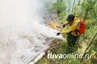 В Туве, где сняли режим ЧС в региональных лесах, до 28 мая находиться в них запрещено