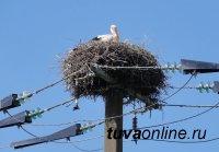 На ЛЭП Тувы установят устройства, защищающие птиц от гибели