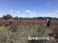 В столице Тувы объявили бой конопле