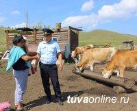В Кызылском районе Тувы провели разъяснительную работу с животноводами