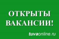Мэрия Кызыла ищет директоров