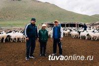В Дзун-Хемчик отправились 1200 племенных овцематок по проекту «Чаа сорук»