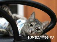 Тува: В поселке Каа-Хем на президентский грант простерилизуют 120 собак и кошек